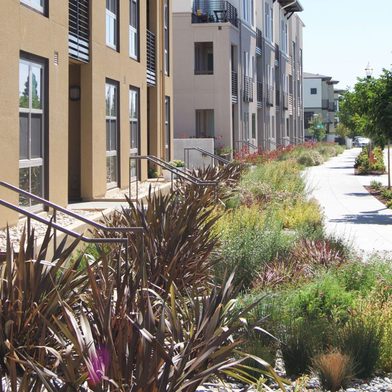 Perimeter Landscaping Project