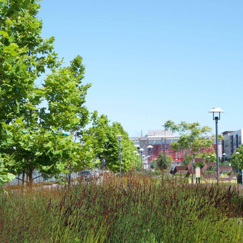 San Mateo Housing Development Landscaping
